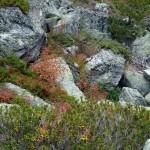 Tolle Alpenflora